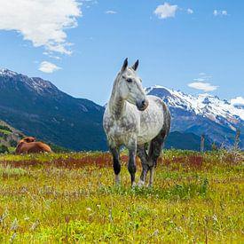 Wit paard in een veld in het Andes gebergte. van Marcel Bakker