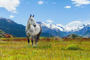 Weißes Pferd auf einem Feld in den Anden. von Marcel Bakker