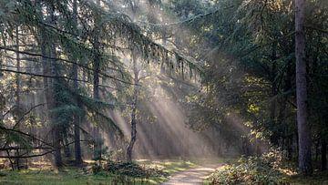 Sonnenharfe im Kiefernwald von Manja van der Heijden