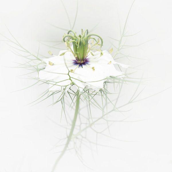 serene wit van ÇaVa Fotografie