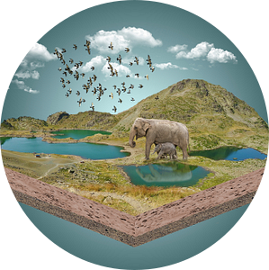 Thirsty elephants van Ursula Di Chito