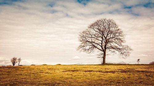 Een solitaire boom