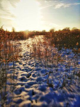 het hazen pad van claes touber