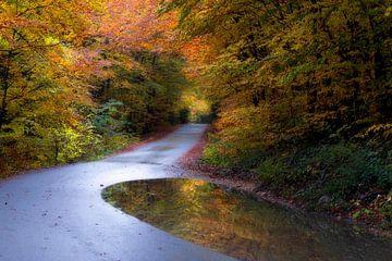 Herfstkleuren van René Pronk