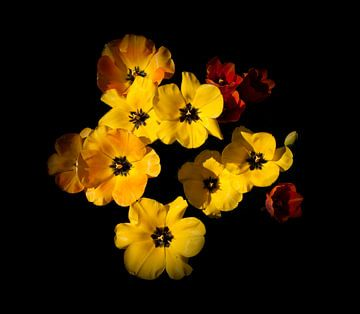 Tulipes jaunes sur Corinne Welp