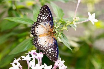 Schmetterling von Dennis Eckert