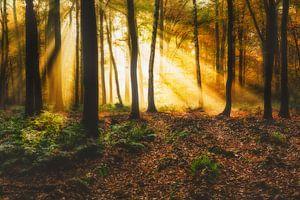 Herfst in Gelders bos