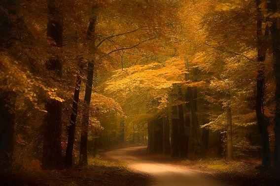 Gouden bospad