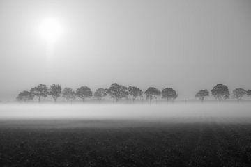 Nebliger Morgen. von Anita Lammersma