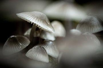 Ein Spiel aus Weiß und Schwarz, gebildet aus einer Gruppe von Pilzen von Studio de Waay