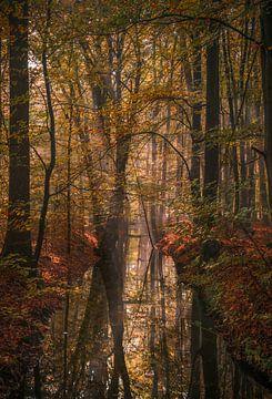 Les arbres qui se voient dans le miroir sur Joris Pannemans - Loris Photography