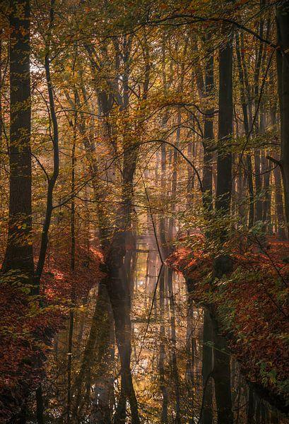 Bomen die zichzelf zien in de spiegel van Joris Pannemans - Loris Photography