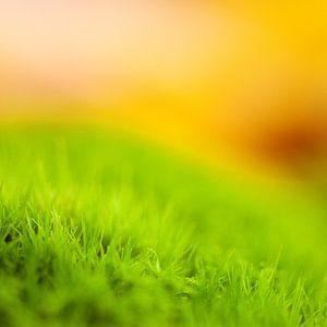 Abstract groen van
