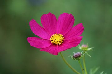 mooie bloem van Mila van Pijkeren
