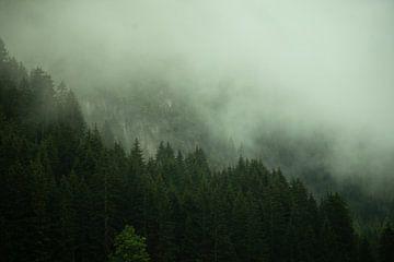 Bomen in de mist van Ivo Michielsen