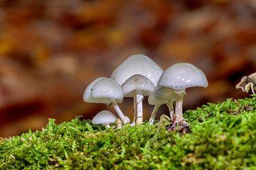 Pilze im Moosbett