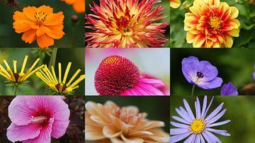 bunte Blumen von Remko van der Hoek- Zijdemans