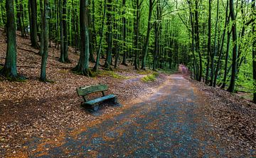 Waldweg mit Bank von Frank Herrmann