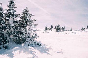 Winterliche Landschaft mit Bäumen von Patrycja Polechonska