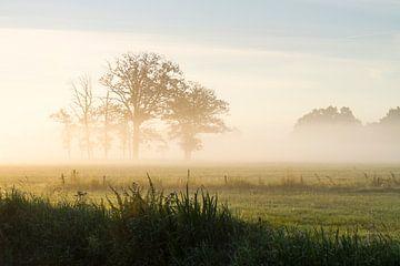 Bomen in de Mist sur Joep de Groot