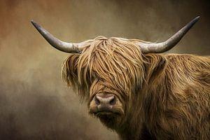 Schotse Hooglander Portret