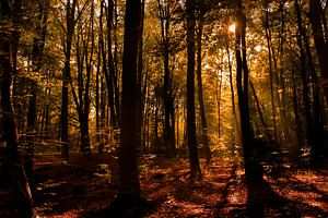 Nazomer in het Kralingse Bos