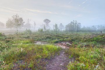 Hoogveengebied Brunssummerheide van Francois Debets