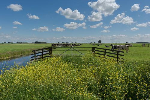 Poldergebied met koeien in de Alblasserwaard