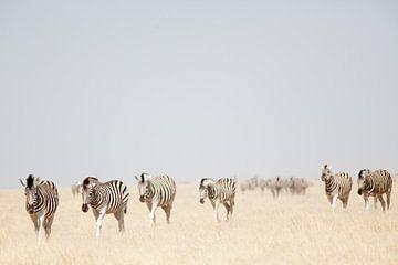 Zebra's in Etosha NP Namibie von Ellen van Drunen