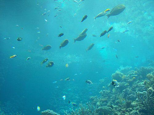 Wondere Onderwater Wereld von Alex Hilligehekken