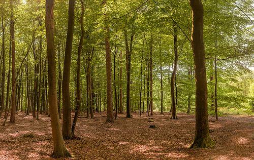 Fototapete Wald von Anita Meis