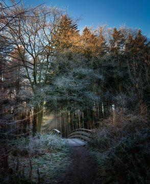 Dritte Brücke in Anna's Hoeve an einem kalten Morgen von Pascal Raymond Dorland