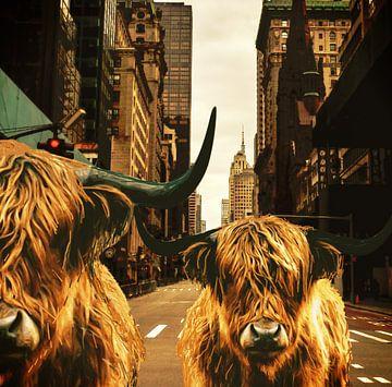 Les Highlanders à New York sur ! Grobie