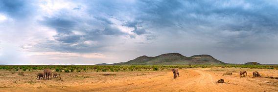 Elephants in the bush van Thomas Froemmel