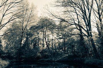 Bomen in het bos van Jane Changart