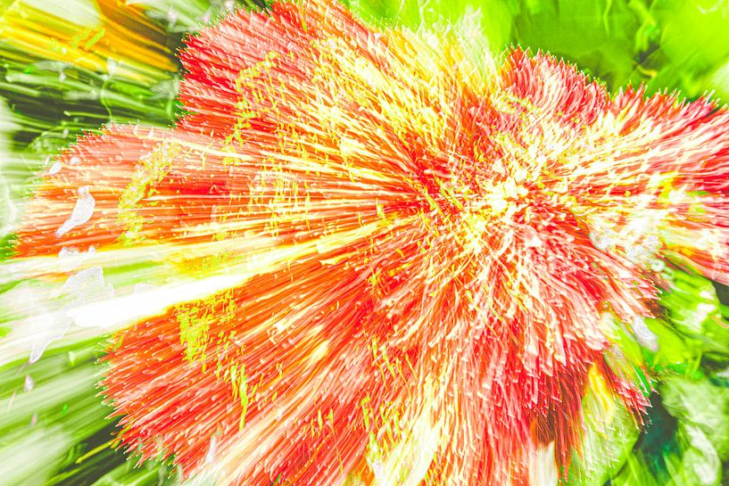 Blume von Jan Peter Jansen