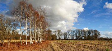 Landschaft mit Birken von Corinne Welp