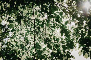 Hintergrundbeleuchtung Natur von Mandy Jonen