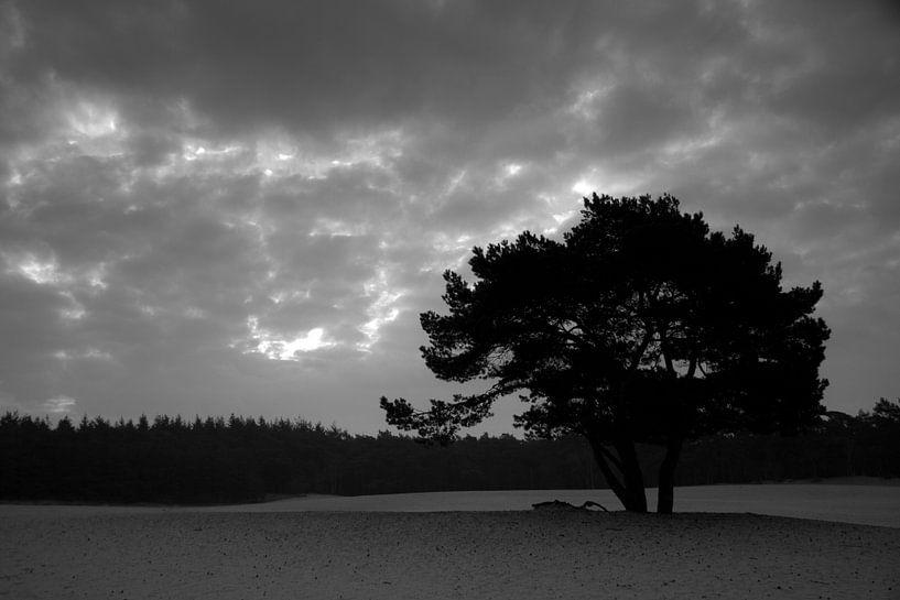 Tree silhouette at sunrise van Marco de Groot