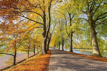 Straße mit Buche entlang Kanal im Herbst von Ben Schonewille