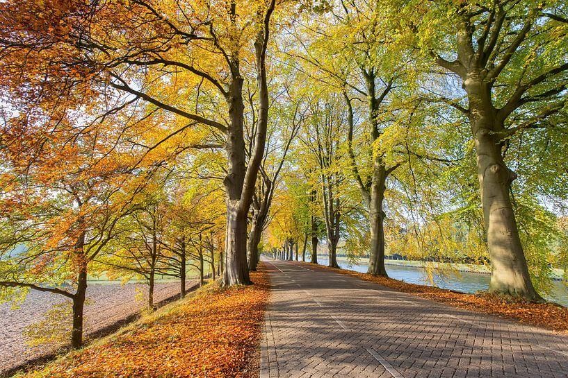 Weg met beuken langs kanaal in herfst van Ben Schonewille