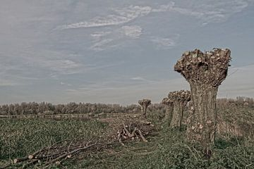 Willows von Petra ter Veer