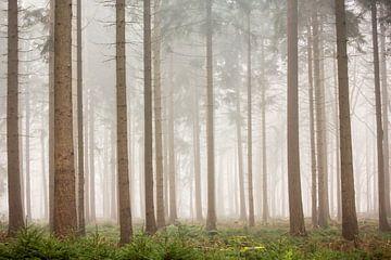 Dennenbos in de mist | Bomen in Nederland, Veluwe van Dylan gaat naar buiten