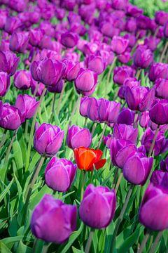 Kleur is alleen maar zonlicht dat anders weerkaatst. van Pascal Raymond Dorland