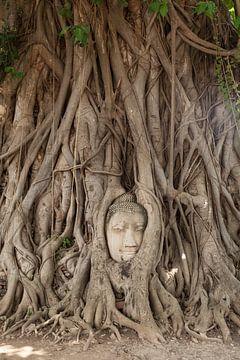 Ayutthaya Thailand van