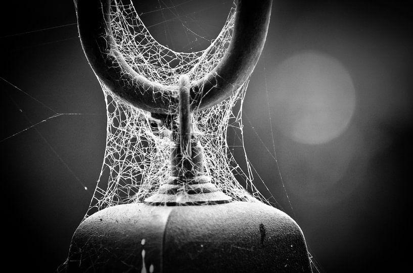 Web of life van Dick Nieswaag