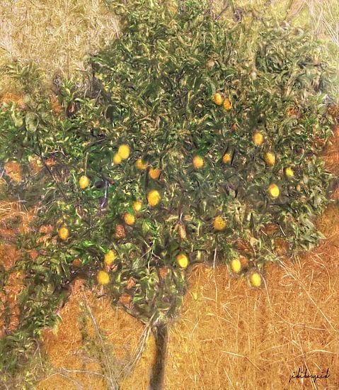 Schilderachtige citroenboom