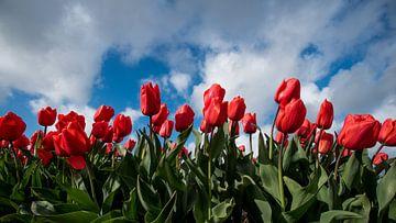 tulpenveld tegen wolkenlucht 01 van Arjen Schippers