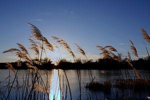 Abends am Teich im Dezember van