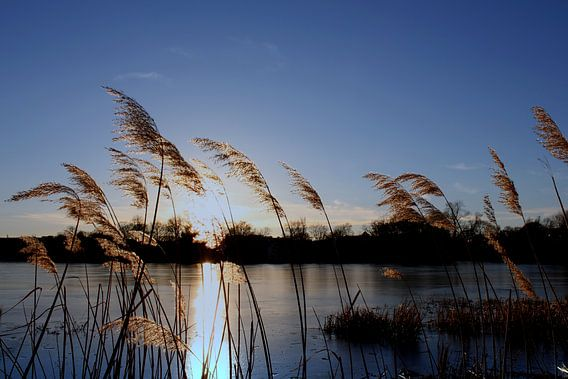 Abends am Teich im Dezember